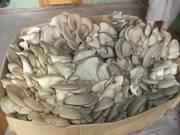 Продается доходный бизнес по выращиванию грибов